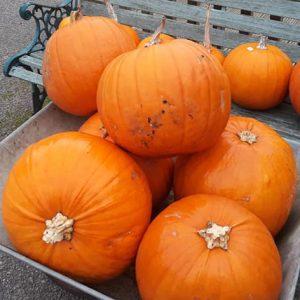 *UPDATE* – Pumpkins